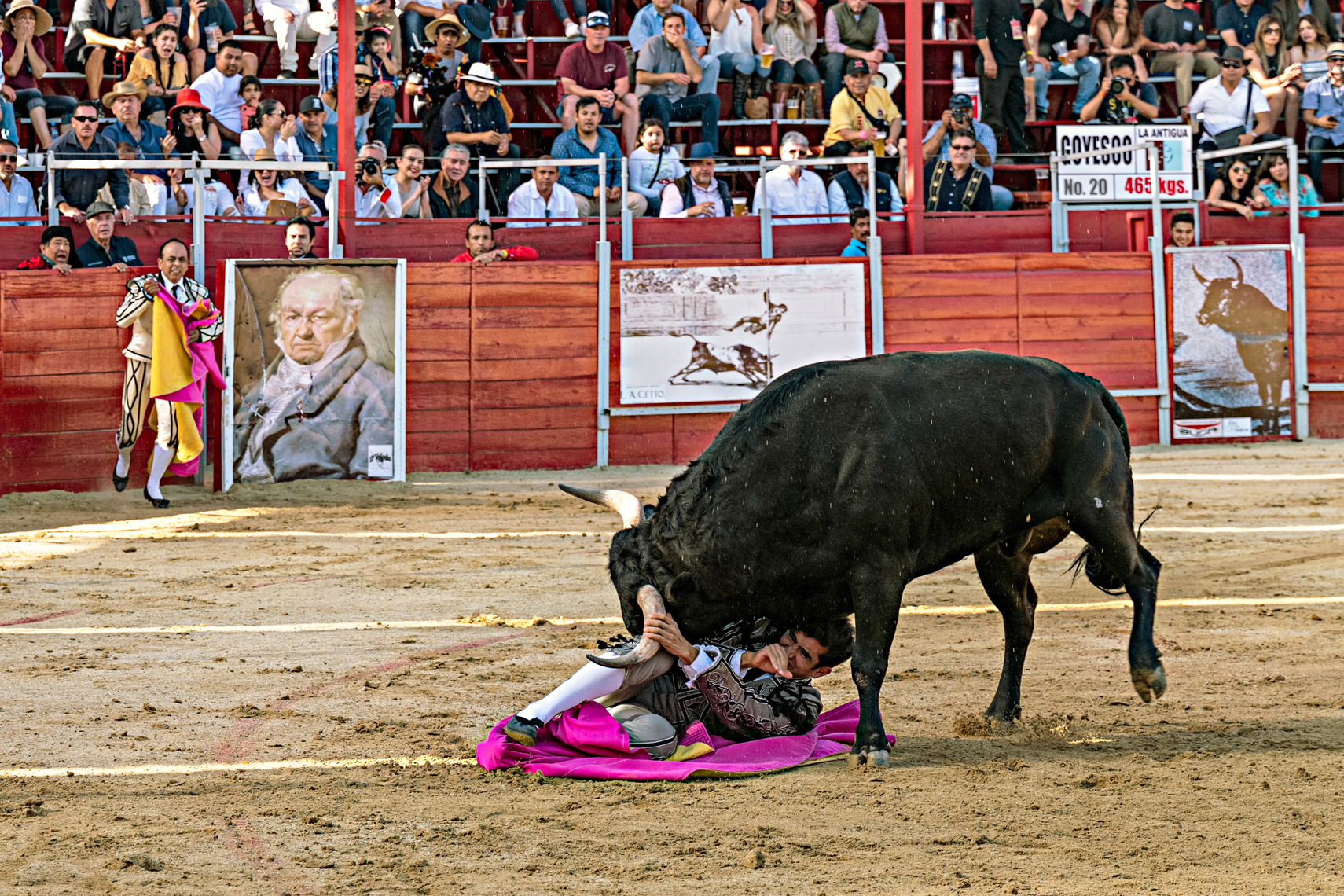 Bullfight13_WEB
