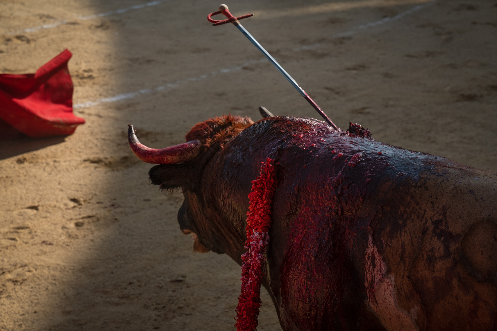 Bullfight15_WEB