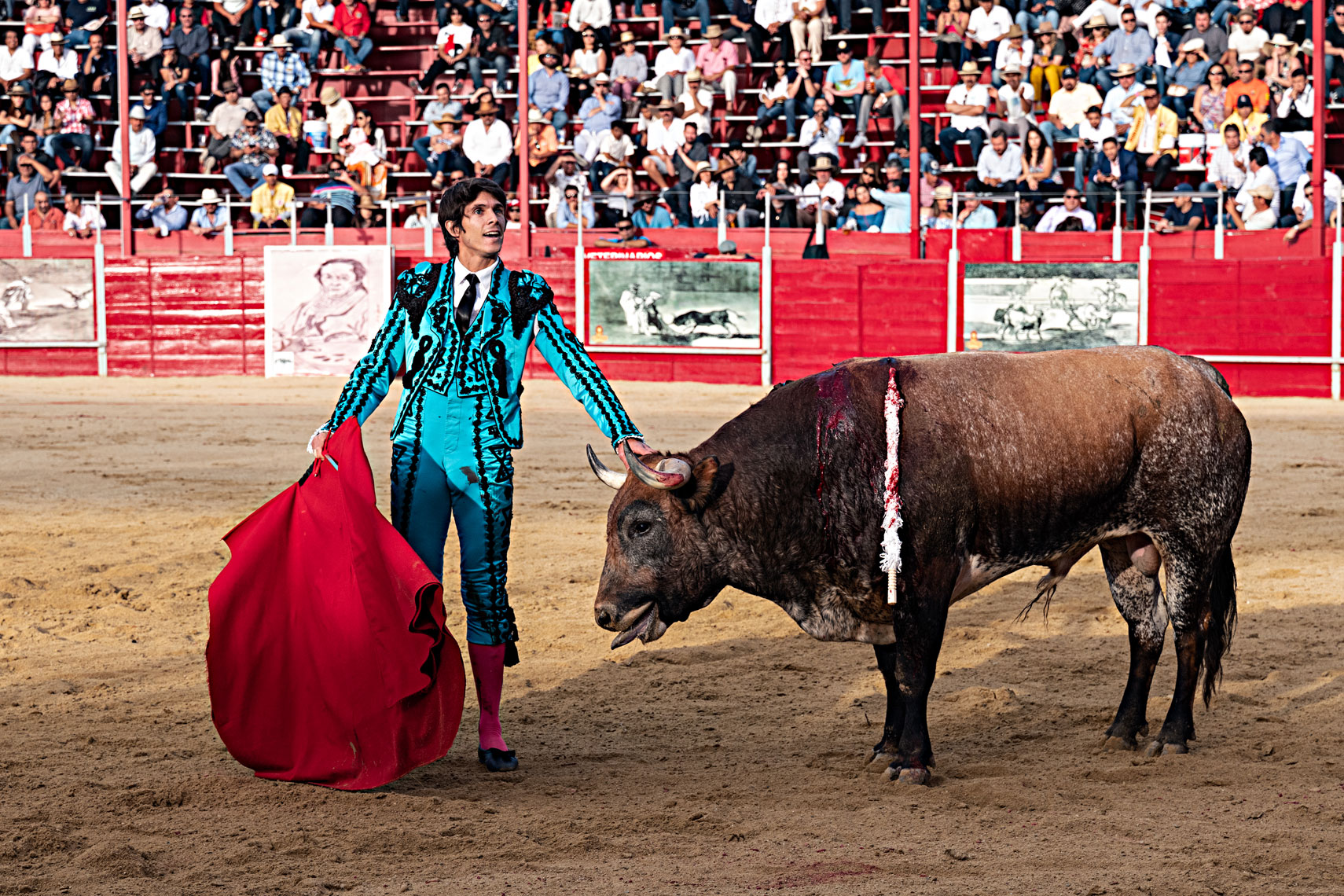 Bullfighting7